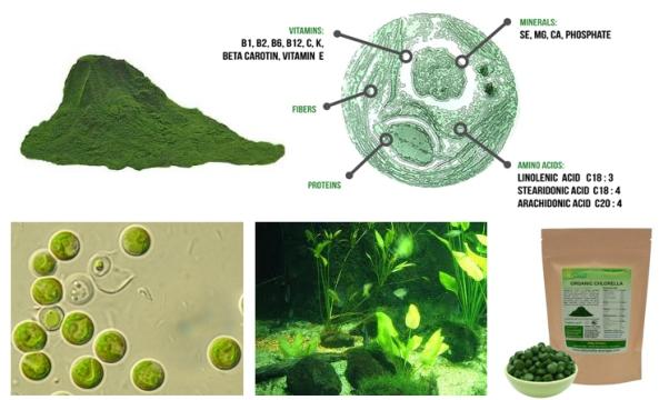 chlorella-ekologisk